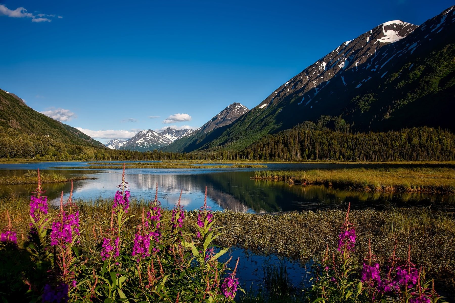 Chugach national forest in Alaska