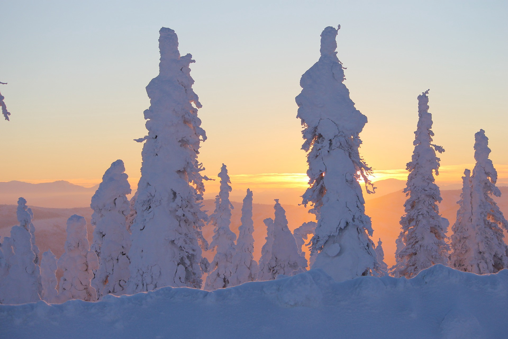 Snow covered pine trees in Alaska