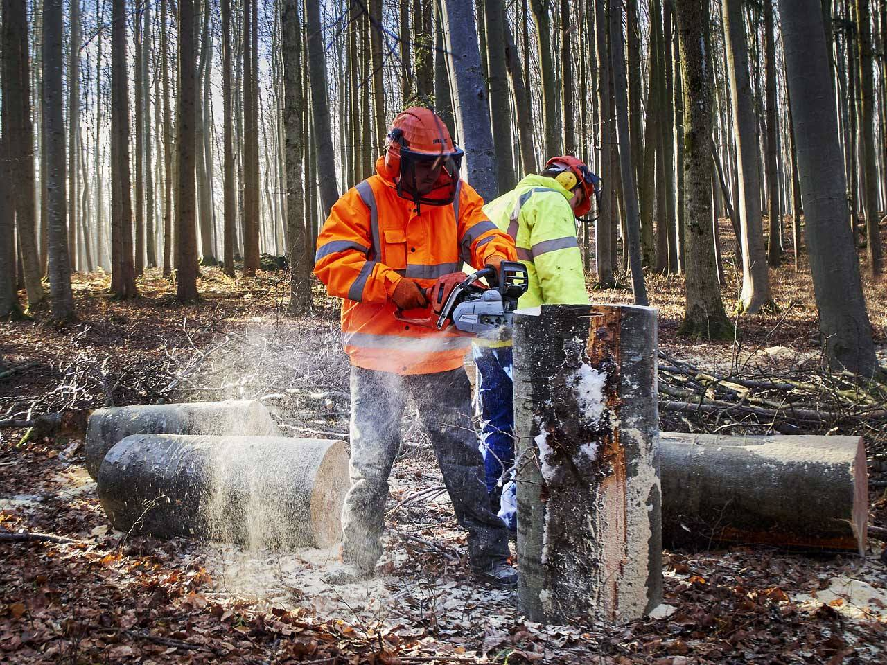 Forest workers logging