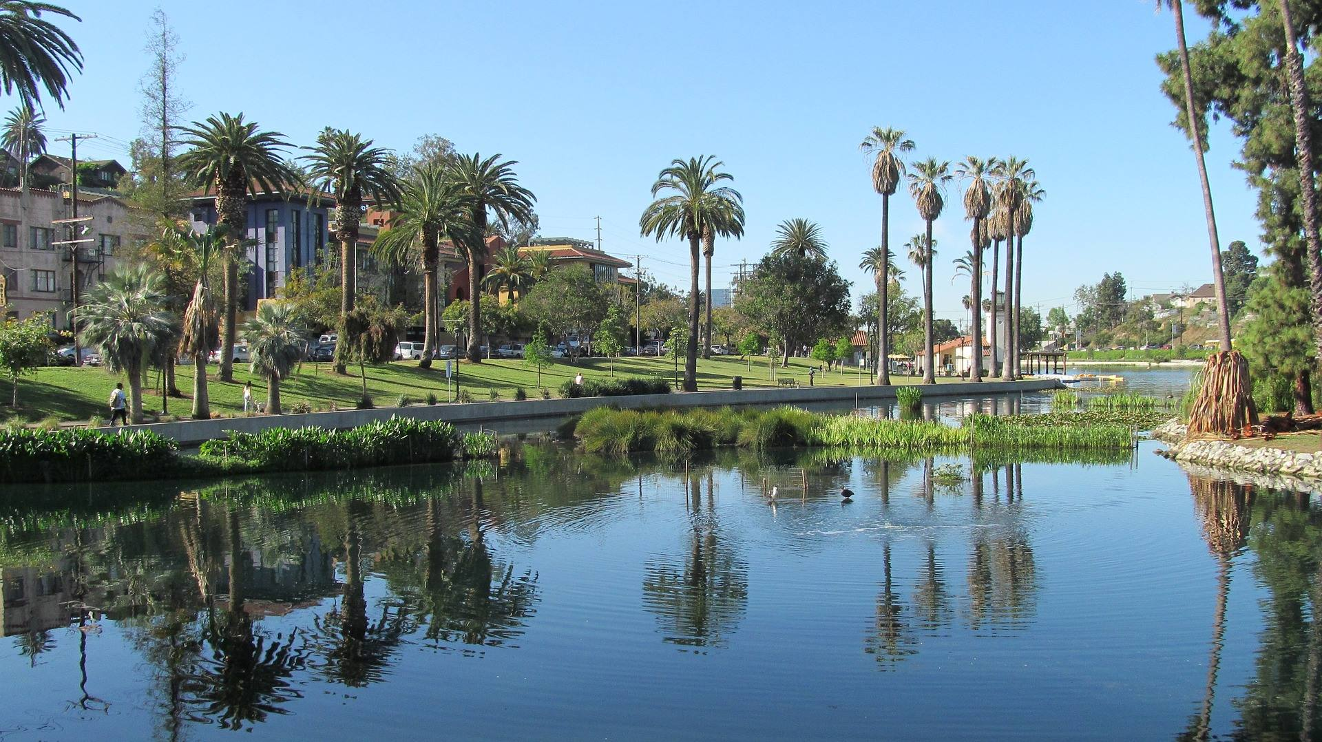 los angeles california echo park palm trees