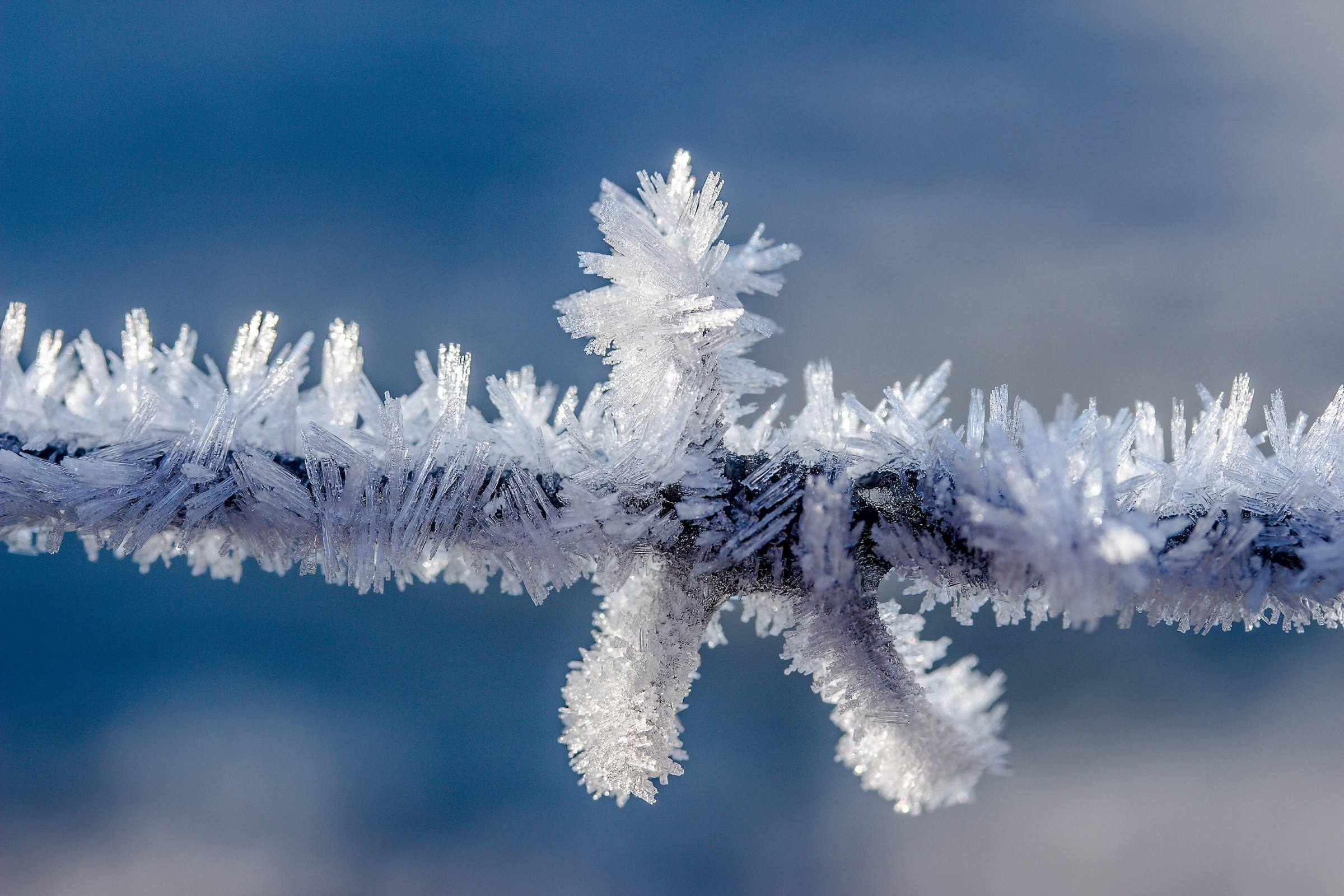 winter branch ice crystals frozen