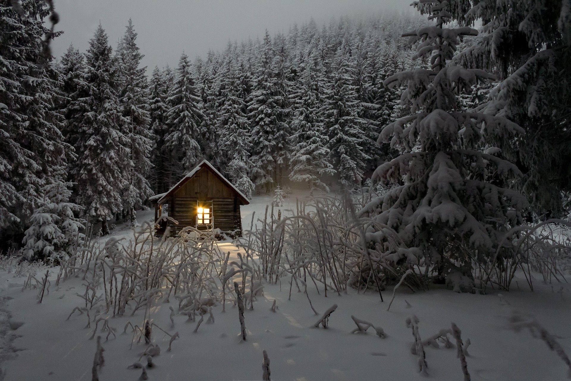 winter fir trees snow cabin light forest
