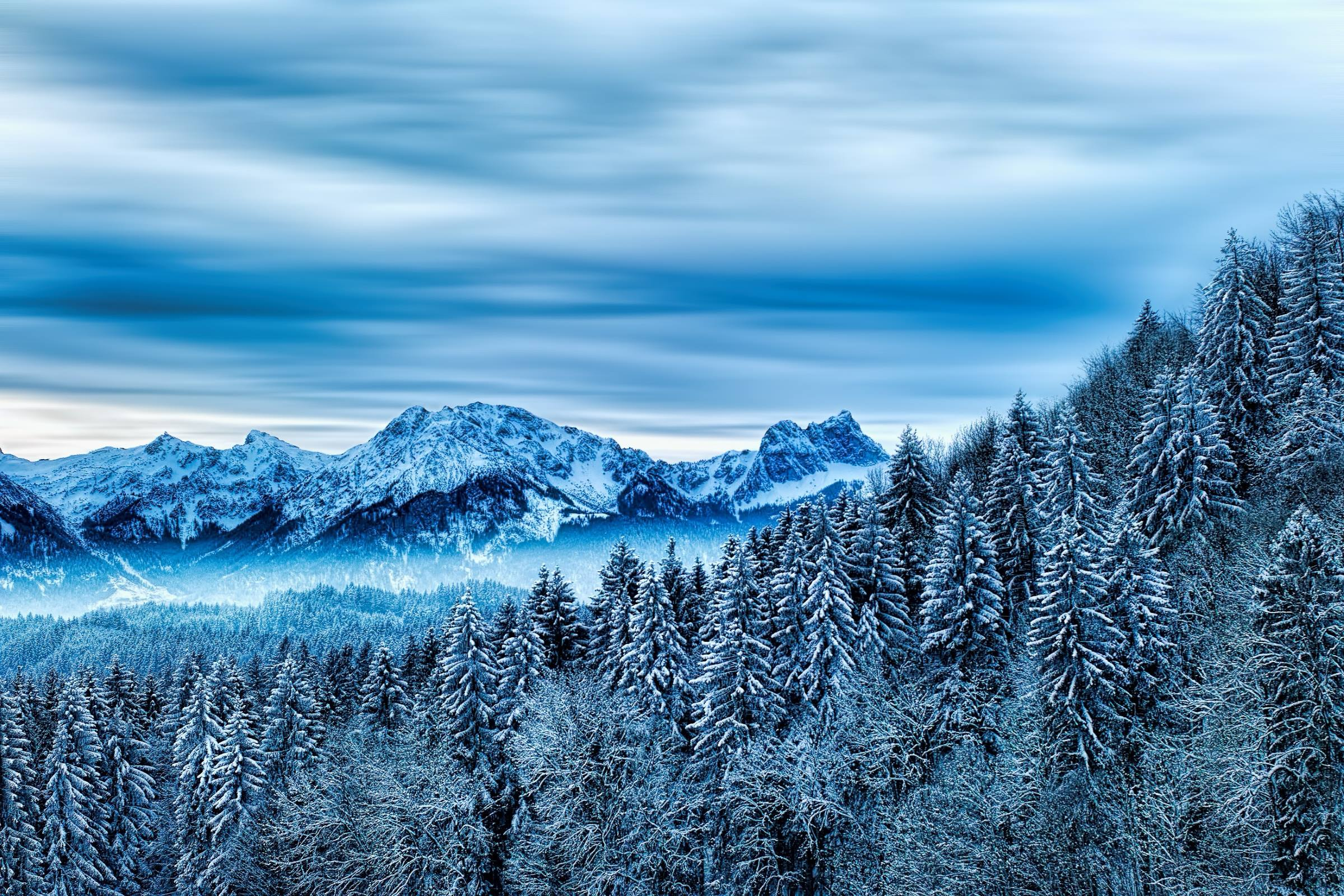 winter forest mountain snow trees