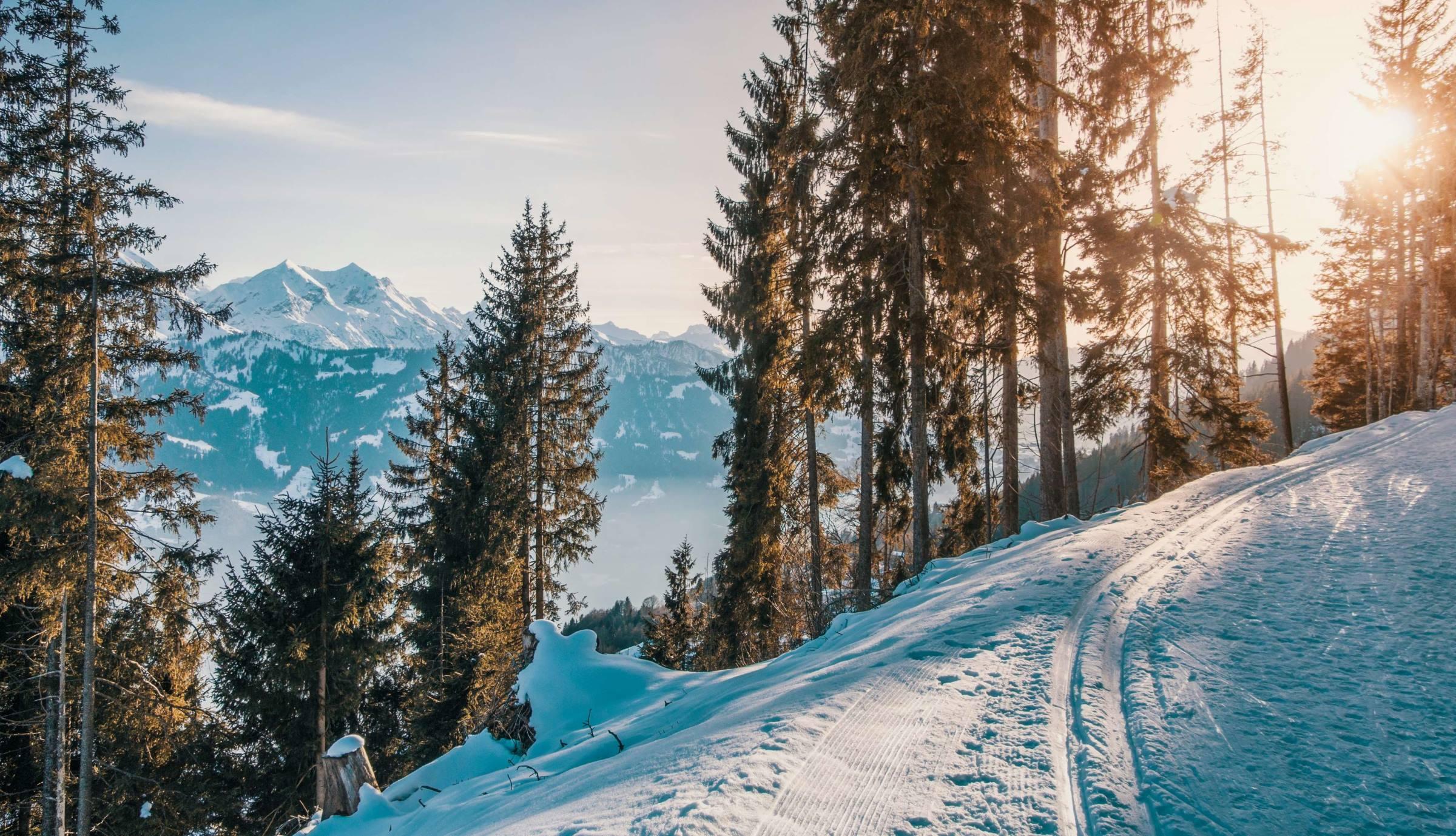 winter landscape pine trees mountains snow