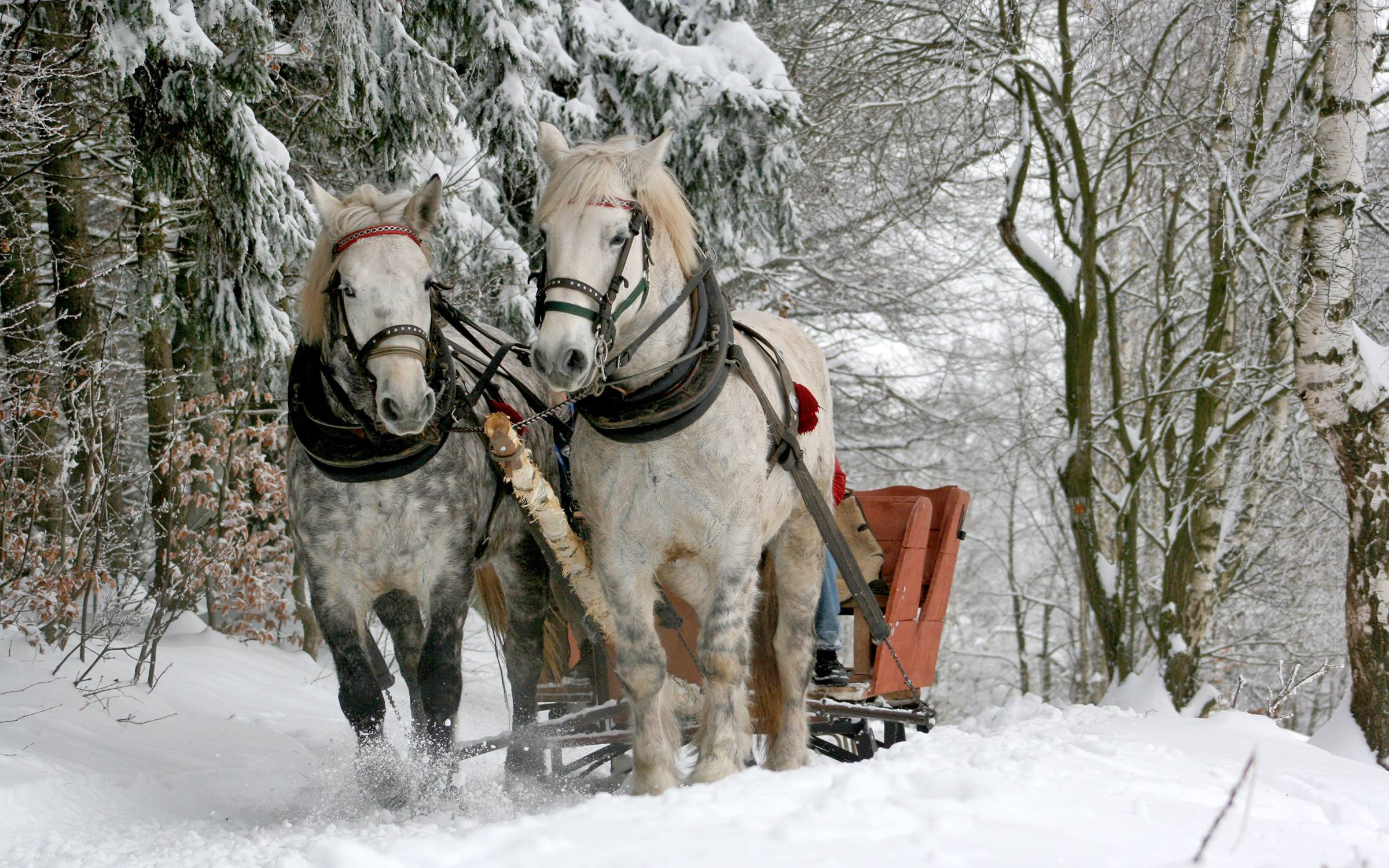 winter sleigh horses snow tress animals