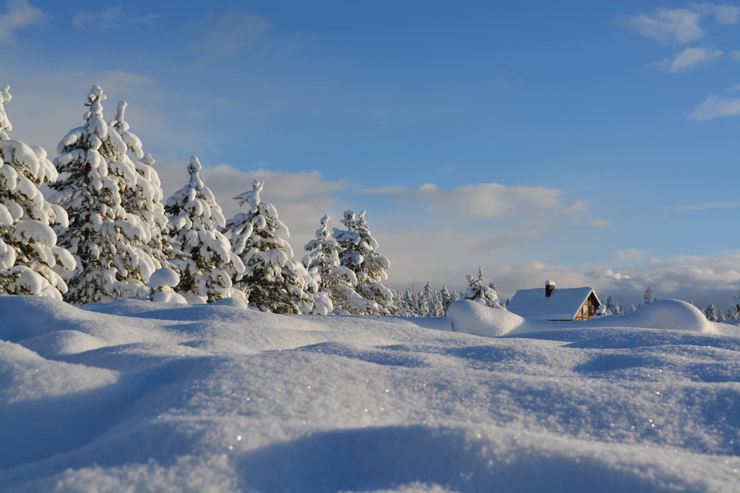 winter snow drift cabin pine trees