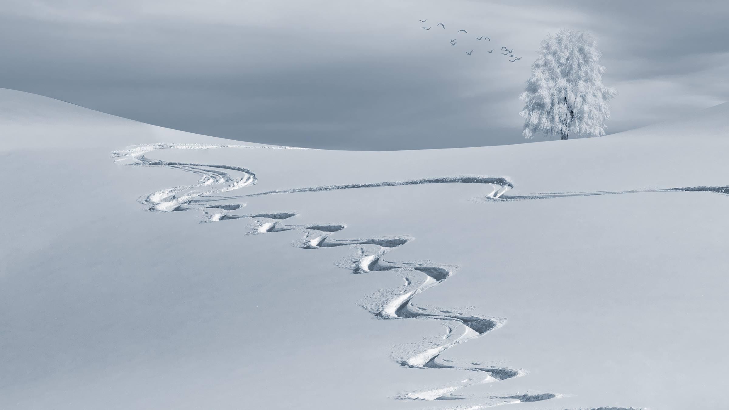 winter snow ski tracks tree
