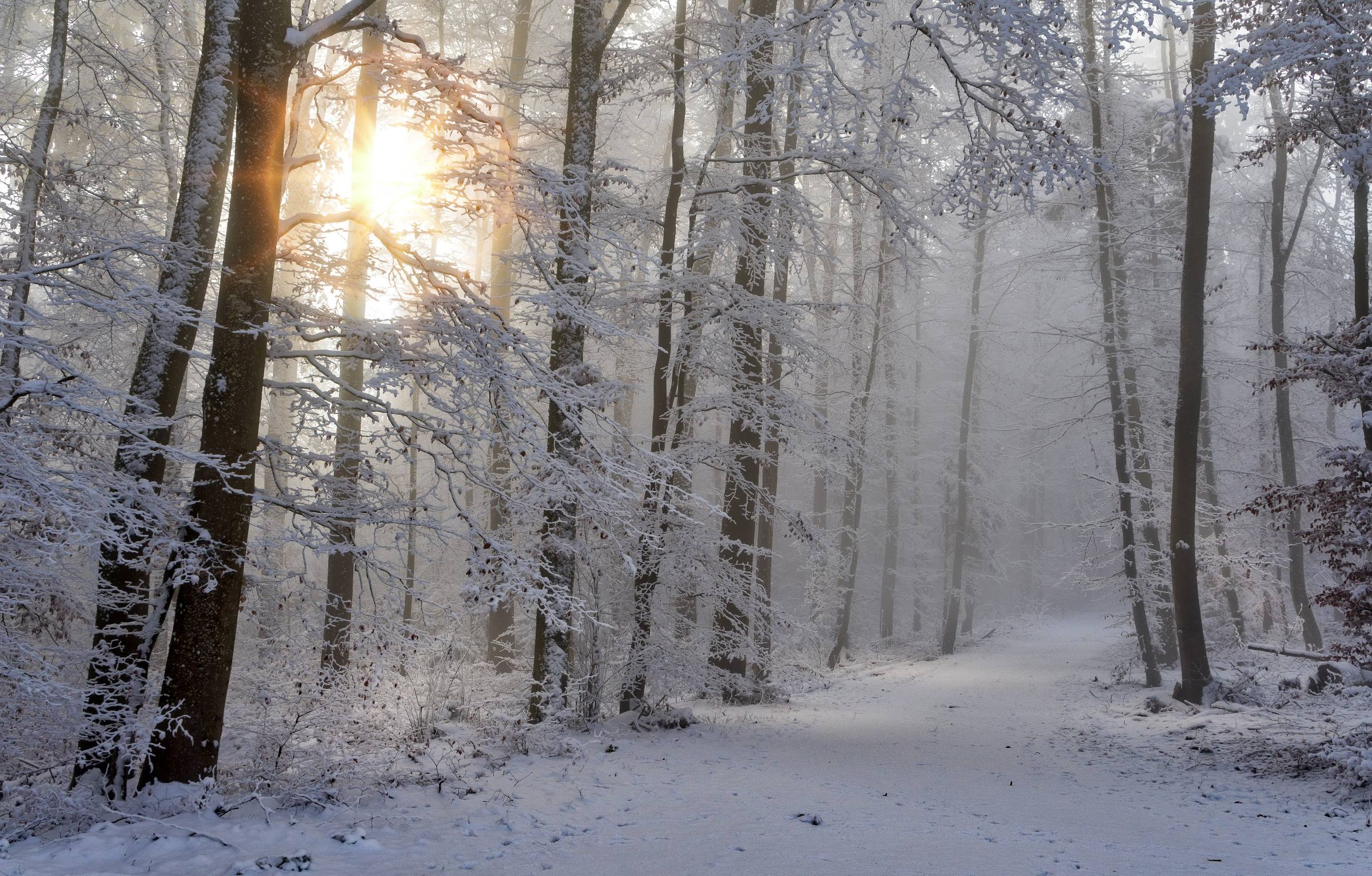 winter snow sun trees forest ice