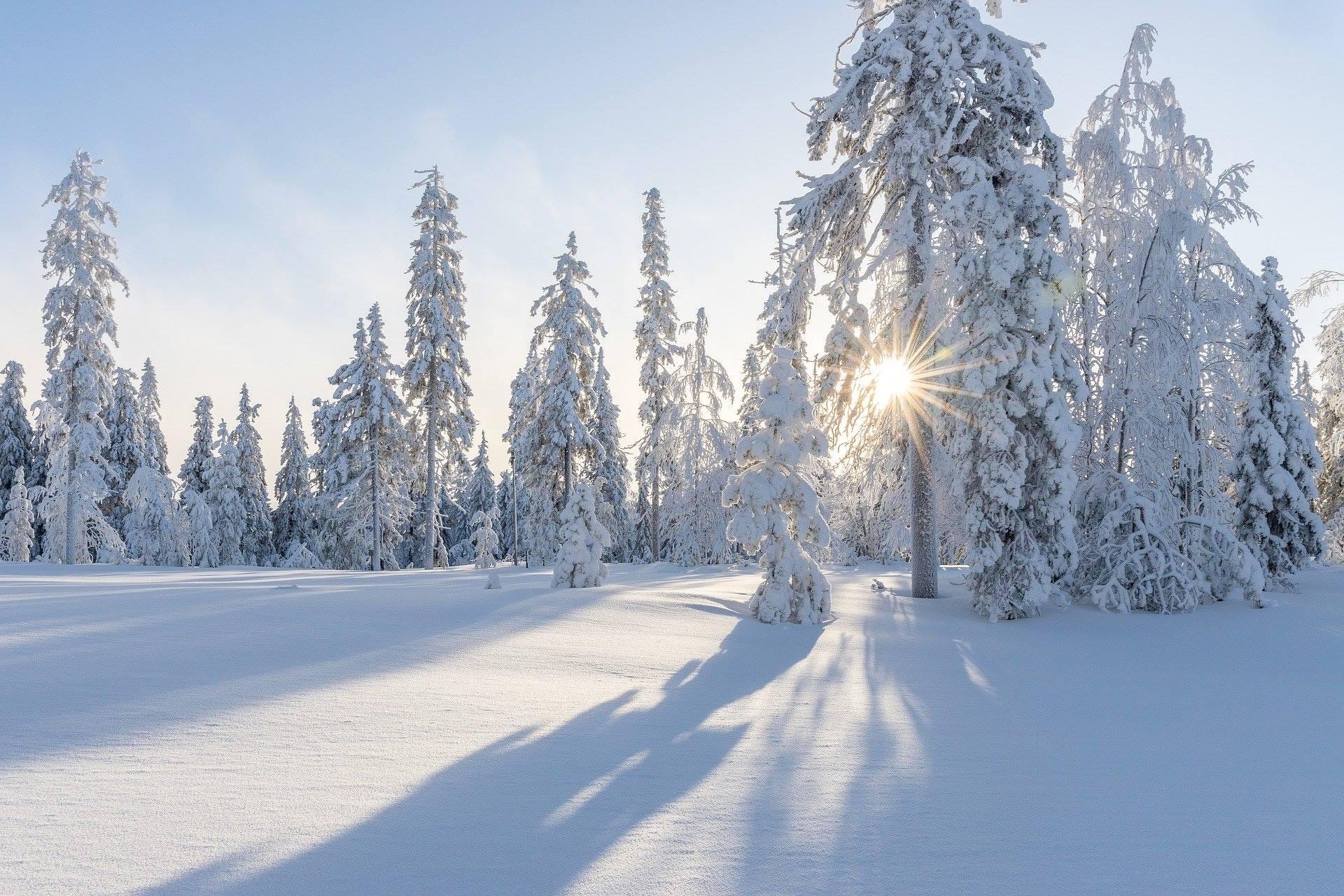 winter snow sun trees landscape