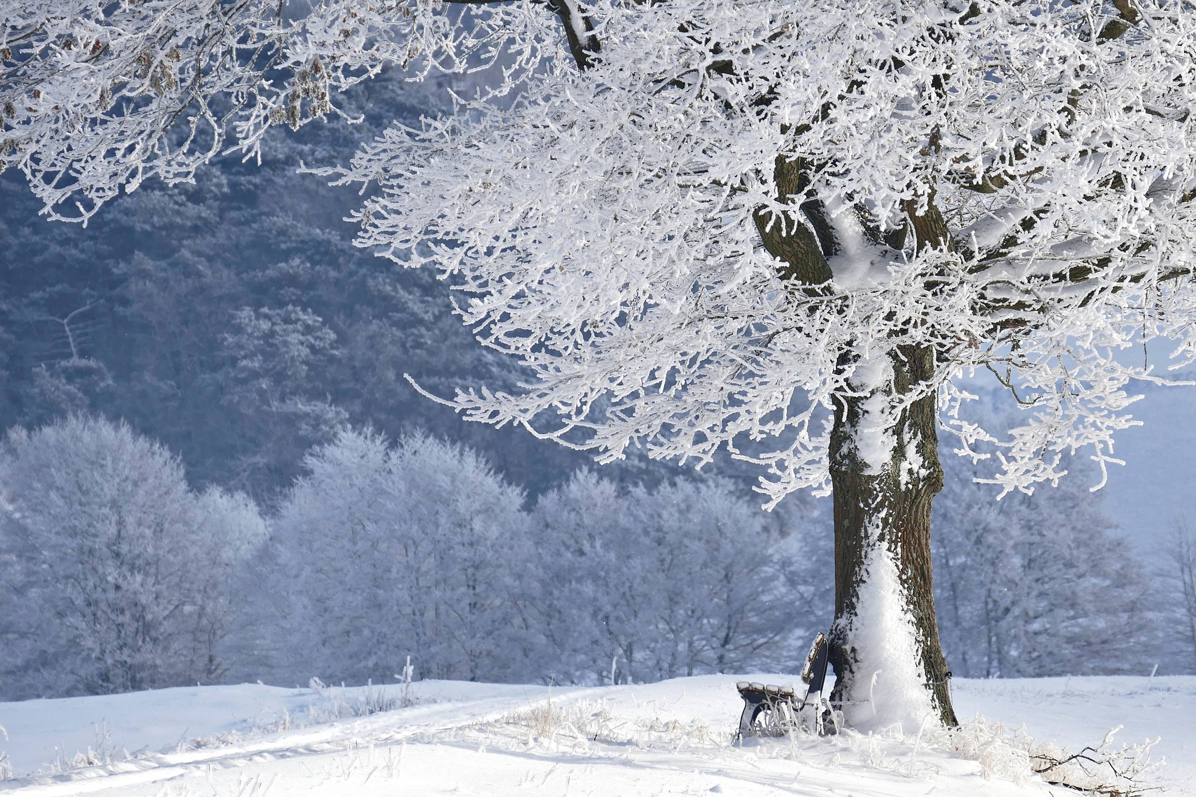 winter snow tree frozen ice forest