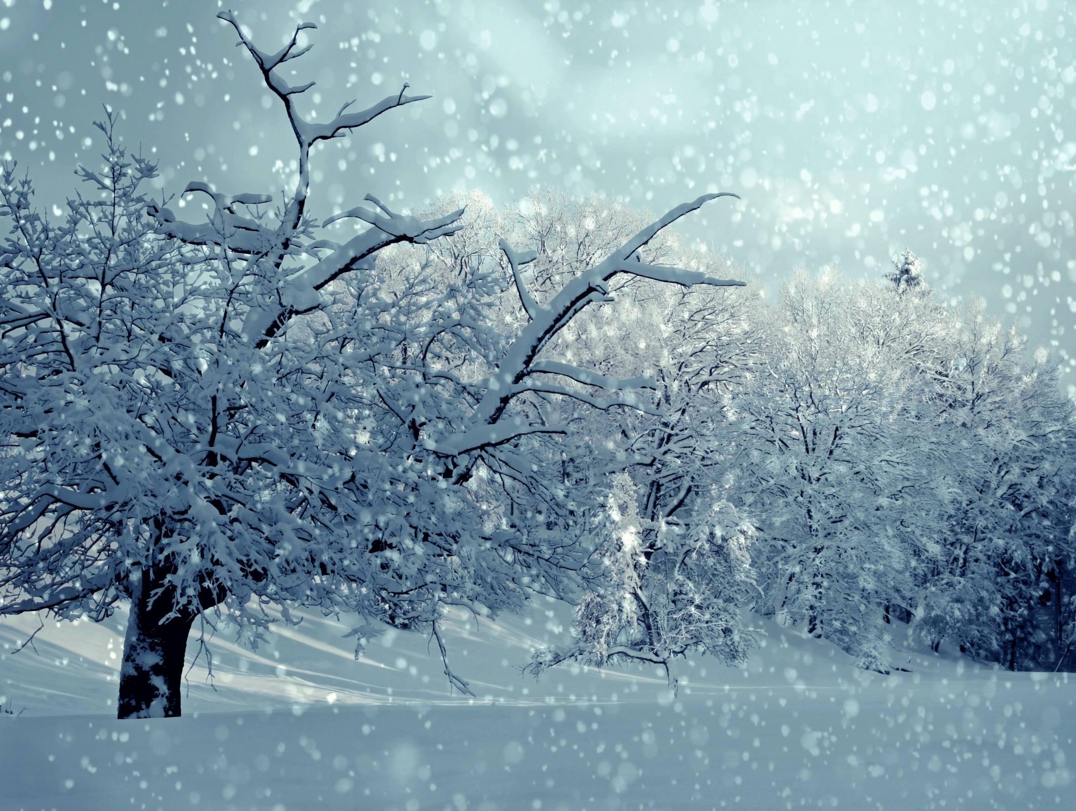 winter snowing snow trees