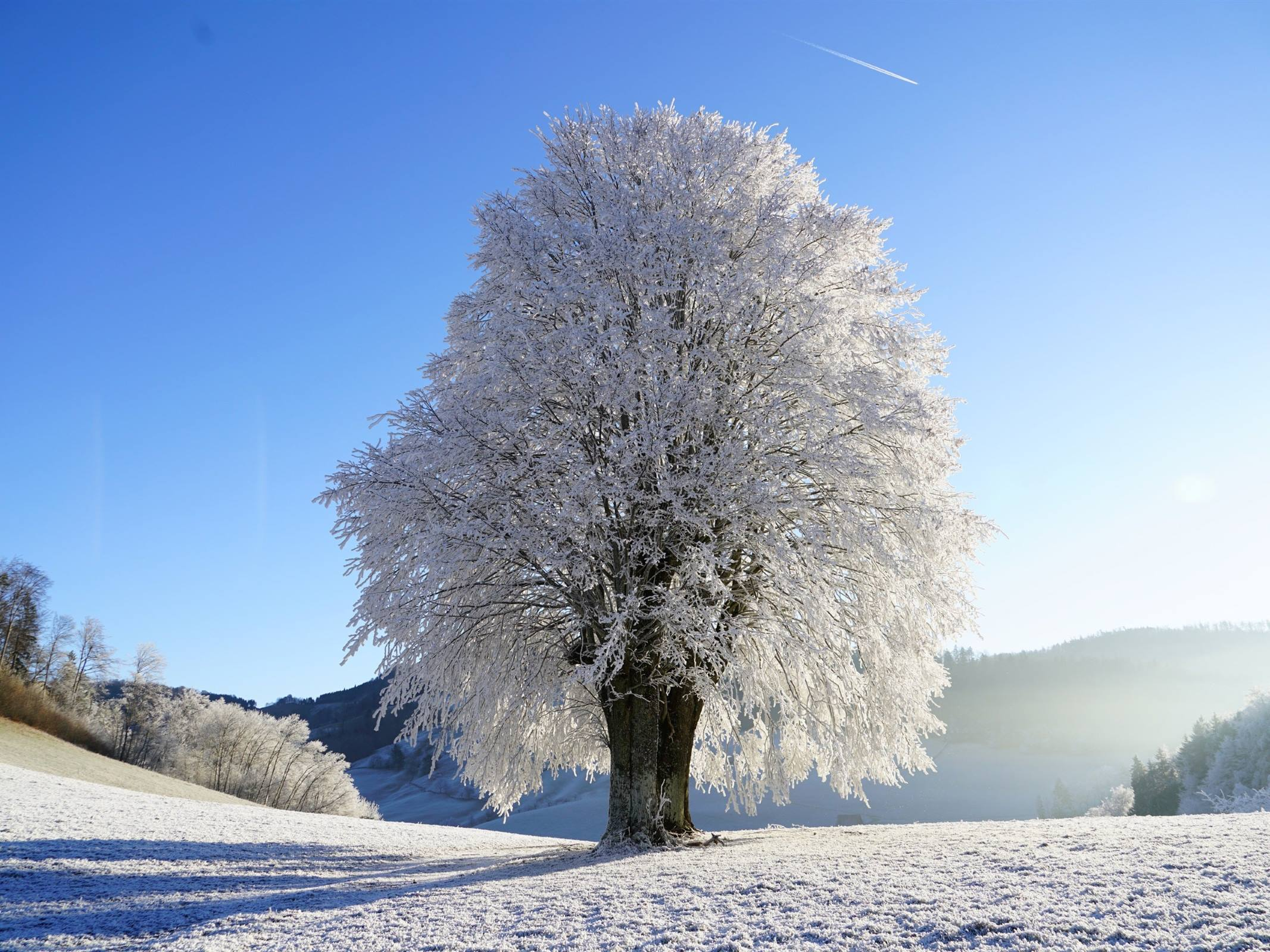 winter tree ice snow landscape