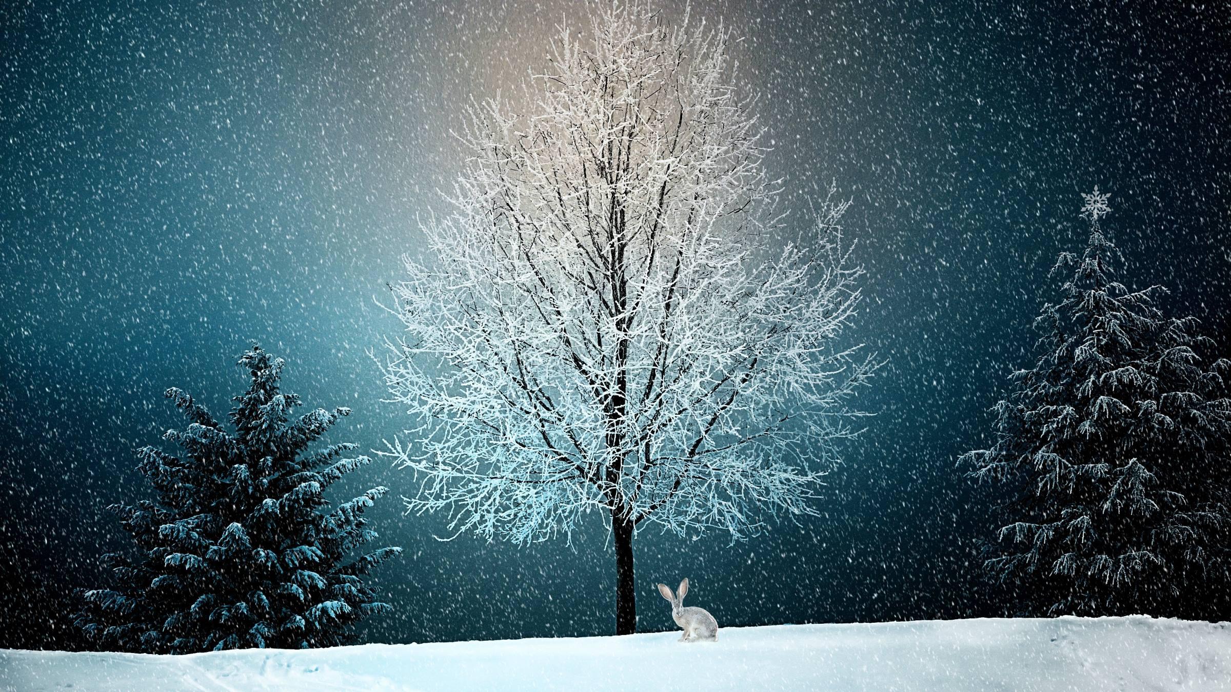 winter trees hare animal snow