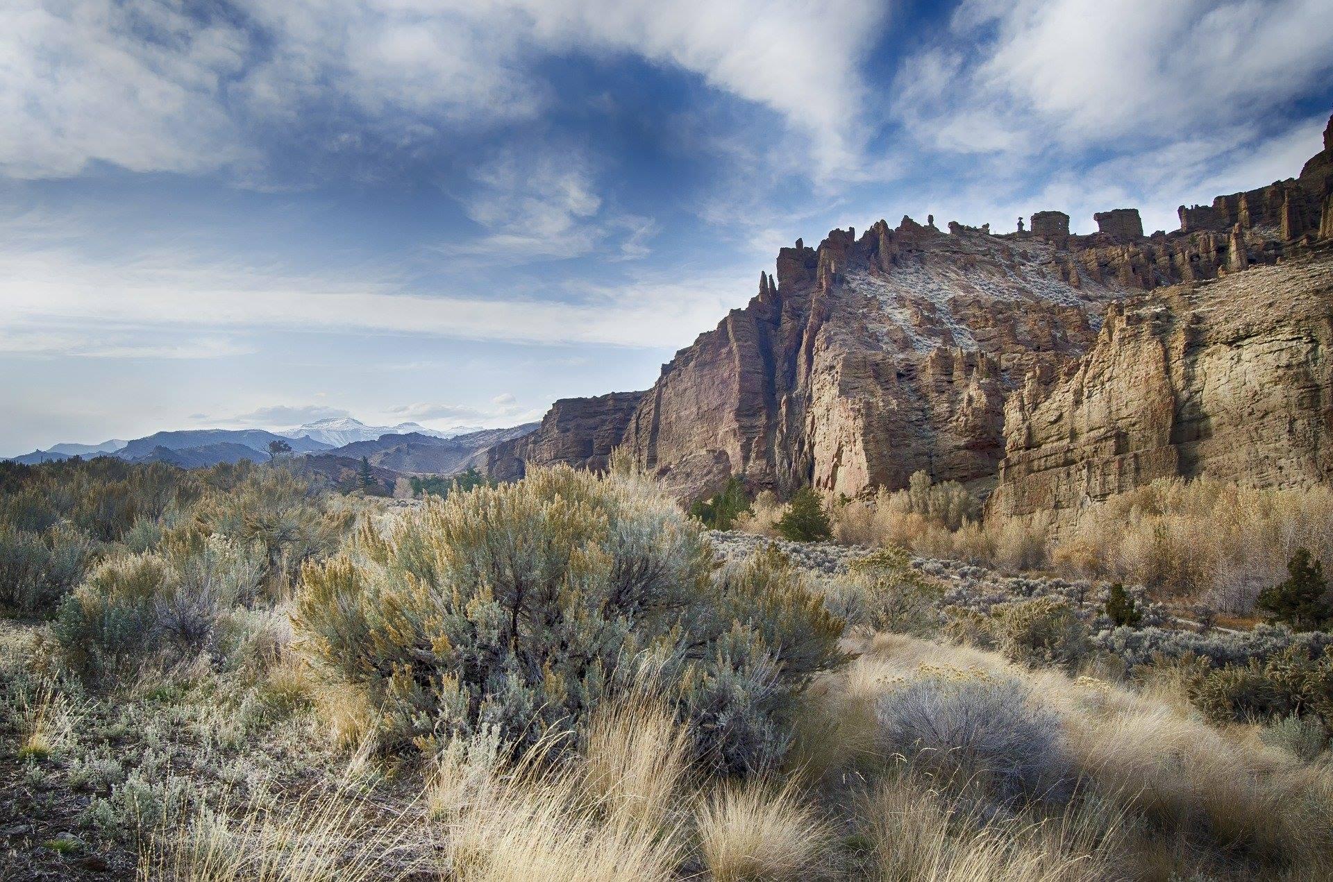 yellowstone national park mountains grass