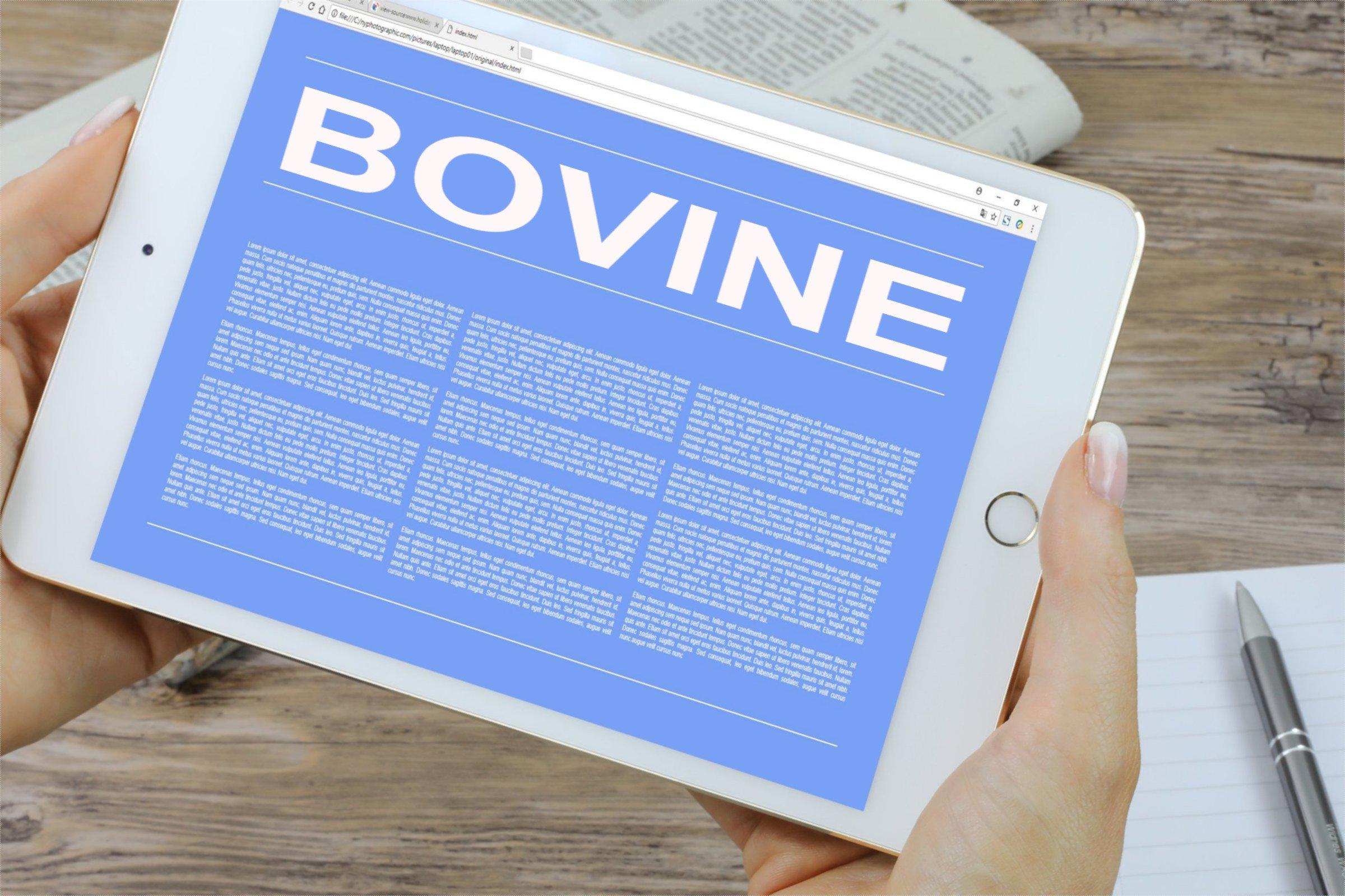 Bovine
