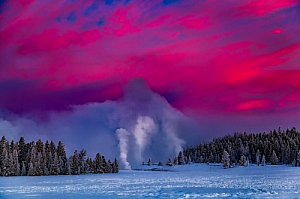 yellowstone national park geyser steam forest
