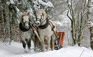 winter sleigh horses snow tress animals