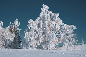 winter snow tree ice blue sky