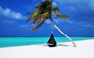 Palm tree with a hammock on a beach