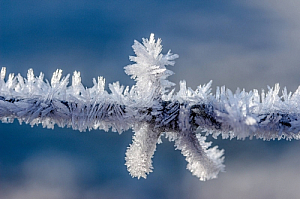 winter branch ice crystals frozen