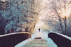 winter bridge snow trees walker