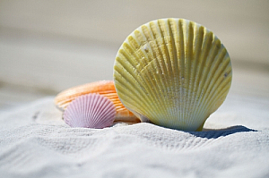 Colored shells on a beach