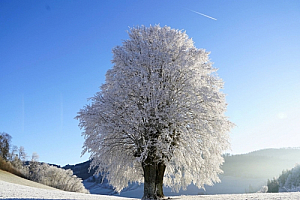 winter tree ice snow landscape