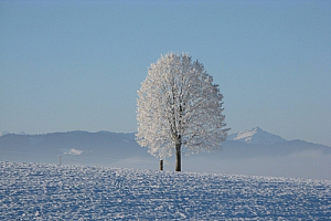 winter tree snow landscape mountain
