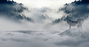 winter snow wolves forest mist