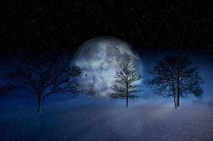 winter snow snowing moon trees