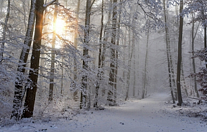 winter snow sun trees forest ice