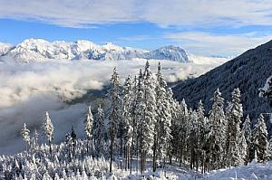 winter landscape mountains snow forest alps